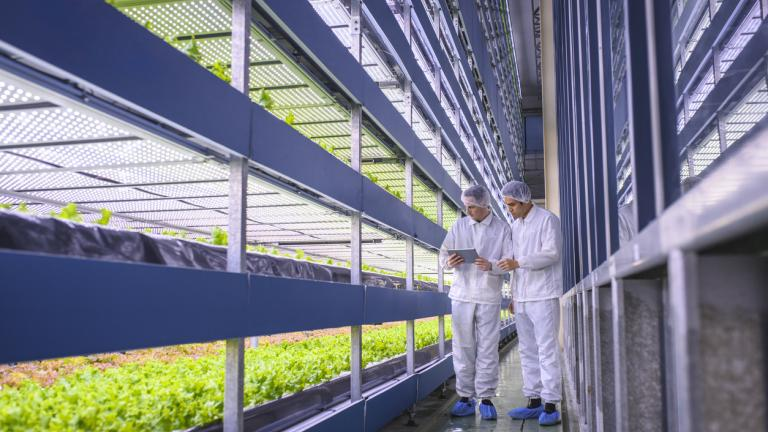Team of researchers studying global food security observe the growth of lettuce crops in a vertical farming facility.