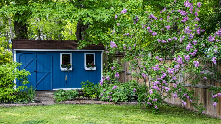 A blue garden shed surrounded by trees and plants