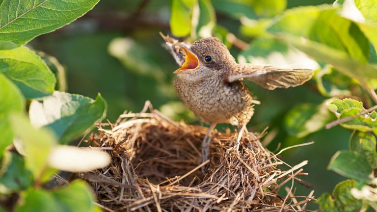 Bird leaving the nest