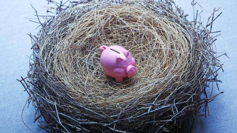 pig in nest