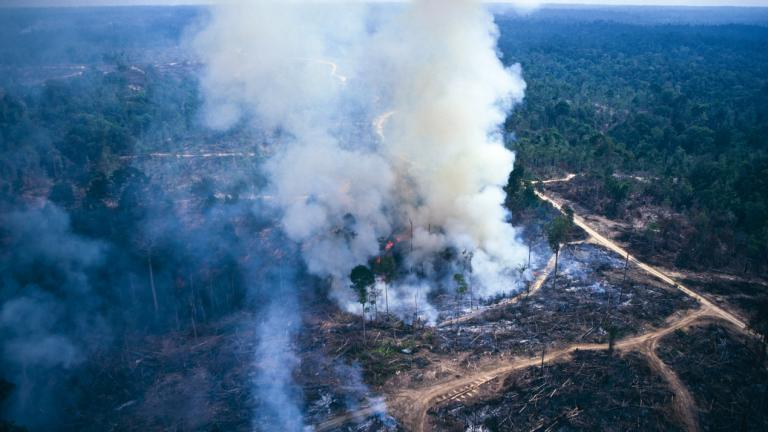 Slash and burn farming, Asia