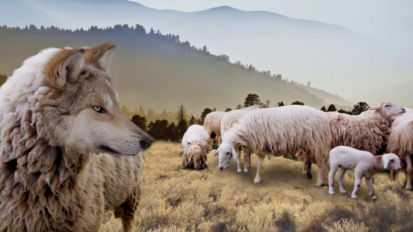 Wolf in sheep's clothing: Metaphor manipulation showing flock of sheep observed by a wolf appearing like a sheep
