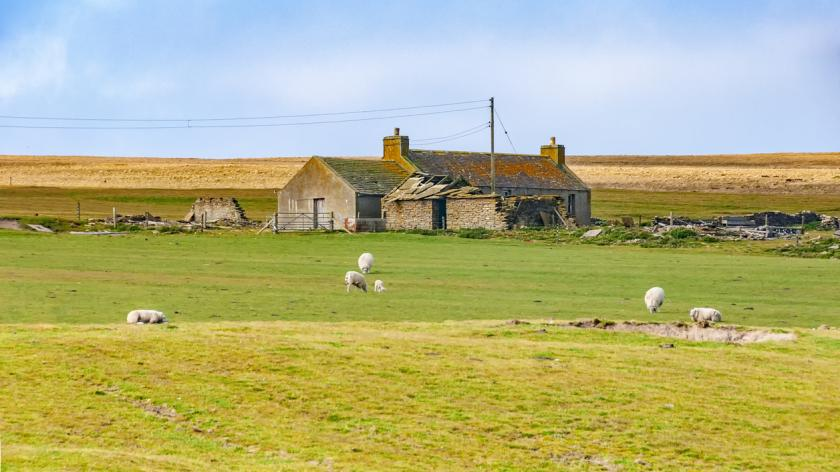 A farm house in Orkney Islands with sheep