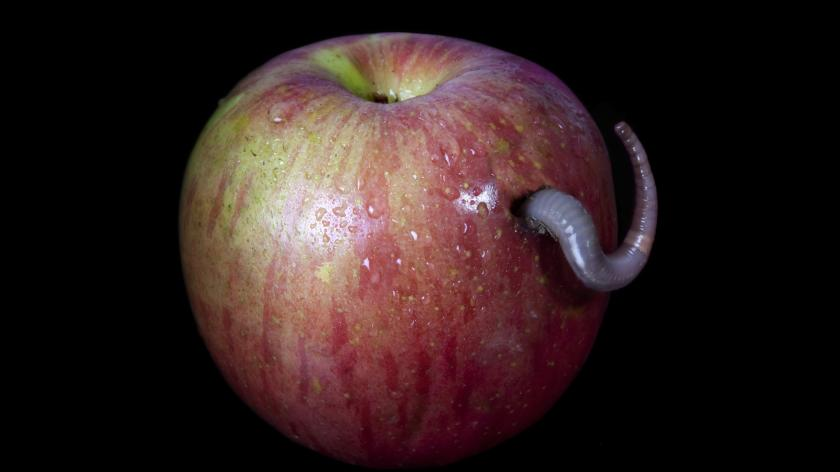 Security risk affecting all apple devices patched by an update - AccountingWeb - Image of an apple with a worm coming out of it.