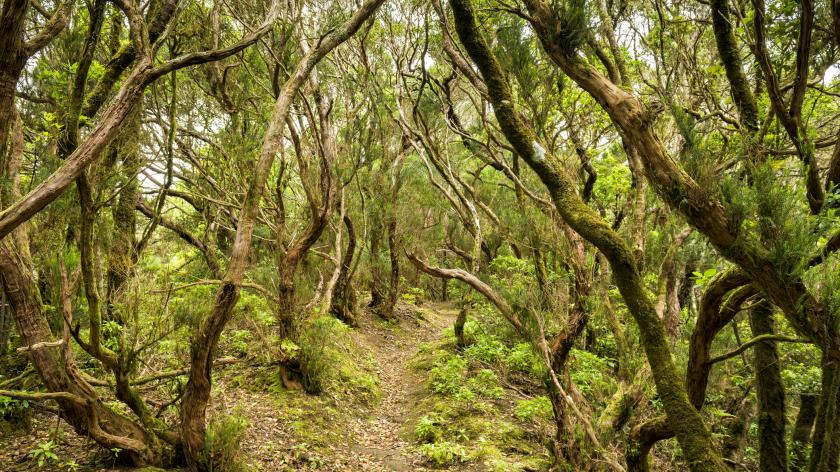 Open Banking evangelists see path through the chaos - Accounting Web - image of a path through trees