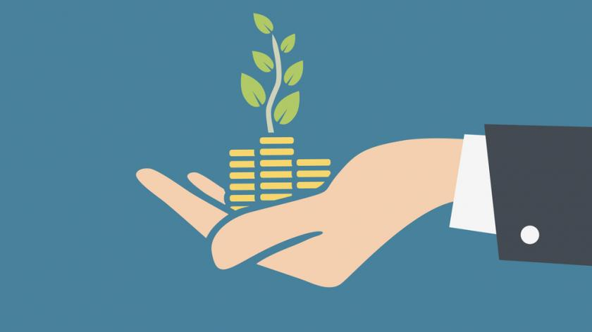 Human hand holding stacks of coins and growth plant