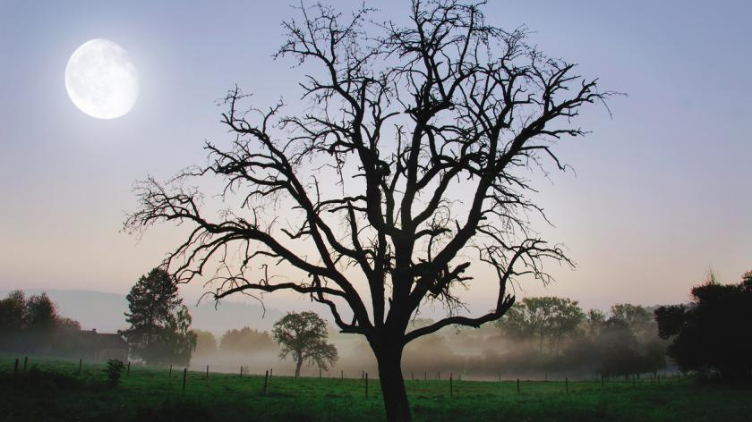 Don't strip your corporate tree of all the low-hanging fruit