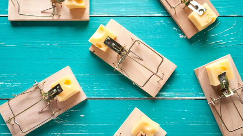 Mouse traps with cheese on turquoise table
