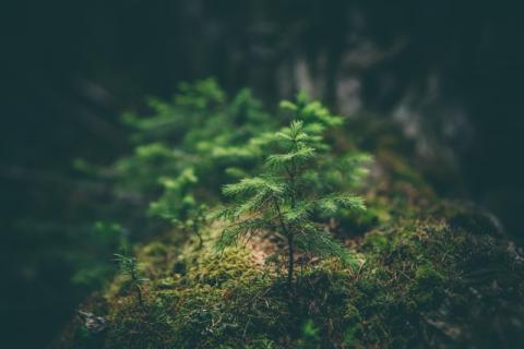 Small tree surrounded by moss