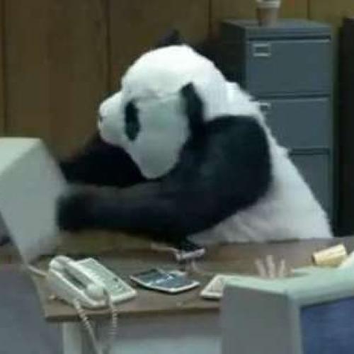 panda ketteringUK